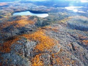 La forêt, entre automne et hiver
